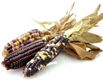 Colorful Dry Corn Stock Image