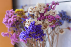 Colorful dry flowes Royalty Free Stock Photo