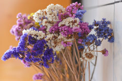 Colorful dry flowes Royalty Free Stock Images