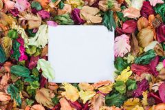 Colorful of dry leaves with aroma. Paper note Stock Photos