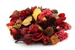Colorful dry leaves and flowers Royalty Free Stock Photo