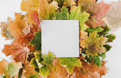 Colorful dry leaves with paper card note Stock Photo