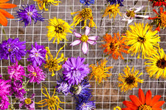 Colorful Drying Flowers. Cut flowers drying against a metal rack form a beautiful abstract background of bright colors Stock Photography