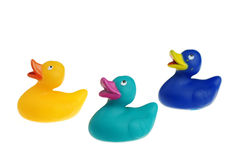 Colorful ducklings Stock Photography