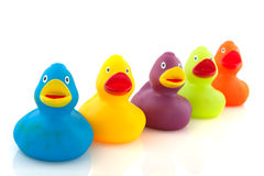 Colorful ducks Royalty Free Stock Photo