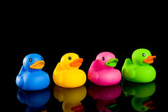 Colorful Ducks on Black Stock Images