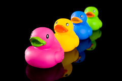 Colorful Ducks on Black Stock Image