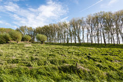 Colorful Dutch rural landscape in spring Stock Photography