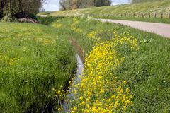 Rural Dutch landscape in springtime. Colorful Dutch rural landscape in the spring season with many blooming wild plants between the fresh green grass Royalty Free Stock Photos