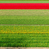Colorful Dutch tulip field Royalty Free Stock Photos
