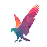 Colorful Eagle Stock Photography