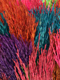 Colorful ear of rice Stock Image