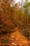 Colorful early autumn forest fallen leaves royalty free stock images