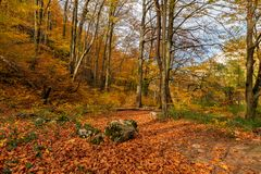 Colorful early autumn forest fallen leaves royalty free stock photography