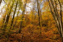 Colorful early autumn forest fallen leaves stock photos