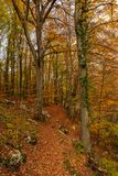 Colorful early autumn forest fallen leaves royalty free stock image