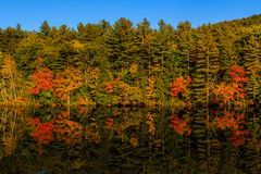 Colorful Early Autumn trees by lake Royalty Free Stock Photography