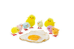 Colorful Easter chicken family watching a fried egg. Stock Photo