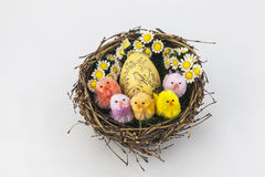 Colorful easter chickens. In nest with egg Stock Photography