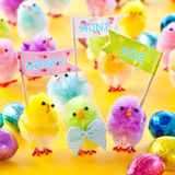 Colorful easter chicks. Colorful easter chenille chicklets in various bright  colors Royalty Free Stock Photography