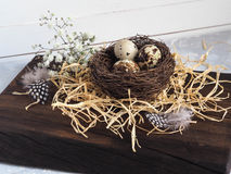 Colorful Easter Decor quail eggs with flowers and bird feather in nest Stock Photos
