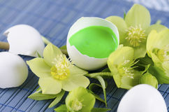 Colorful Easter decoration with egg shell filled with green tempera paint and hellebore stock images