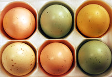 Colorful easter eggs. In carton Royalty Free Stock Photography