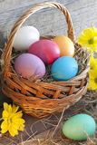Colorful easter eggs in the basket Royalty Free Stock Photo
