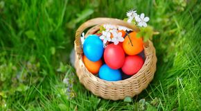 Colorful Easter eggs in a basket on a grass Stock Image