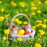 Colorful easter eggs in a basket Royalty Free Stock Photo