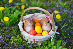 Colorful easter eggs in a basket Royalty Free Stock Photography