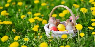 Colorful Easter eggs in a basket on a grass with two bunnies. royalty free stock photography