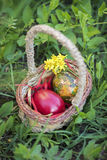Colorful Easter eggs in a basket and green grass background.  Royalty Free Stock Photos