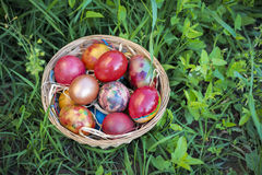Colorful Easter eggs in a basket and green grass background.  Royalty Free Stock Photo