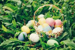 Colorful easter eggs and basket on green grass with sunlight. vintage toned royalty free stock image