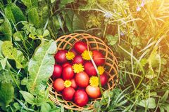 Colorful easter eggs in basket. Happy Easter, Christian religiou Stock Images