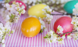 Colorful easter eggs with blooming cherry twig on a wooden background Stock Photo