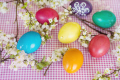 Colorful easter eggs with blooming cherry twig on a wooden background Stock Photos