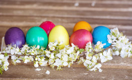 Colorful easter eggs with blooming cherry twig on a wooden background Royalty Free Stock Photography