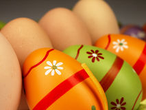 Colorful Easter eggs in the company of ordinary eggs. Royalty Free Stock Photos