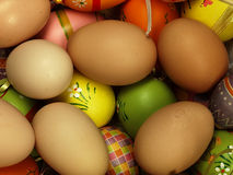 Colorful Easter eggs in the company of ordinary eggs. Royalty Free Stock Photo