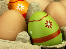 Colorful Easter eggs in the company of ordinary eggs. Stock Photo