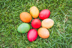 Colorful Easter Eggs with Daisy Stock Image