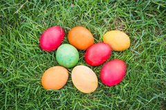 Colorful Easter Eggs with Daisy Stock Images