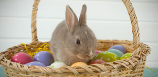 Colorful Easter eggs and Easter bunny in wicker basket Royalty Free Stock Photo