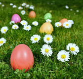Colorful Easter eggs in a field Stock Images