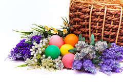 Colorful easter eggs and flowers Royalty Free Stock Images
