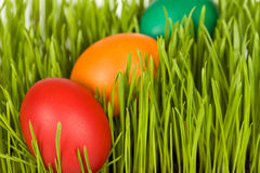 Colorful easter eggs in fresh grass Royalty Free Stock Photos
