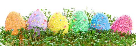 Colorful Easter eggs in garden cress Stock Images