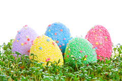 Colorful Easter eggs in garden cress Stock Image
